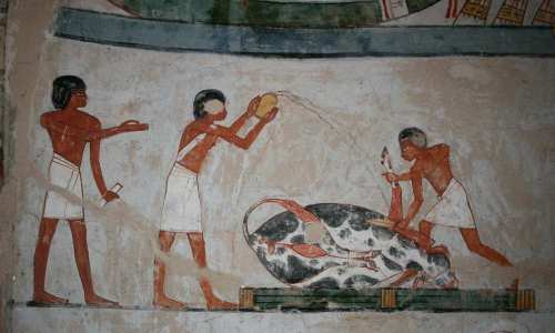 Sacrifice of an ox in the funerary ceremony. Painting from the tomb of Menna in Gourna. XVIII Dynasty. Photo: www.osirisnet.net