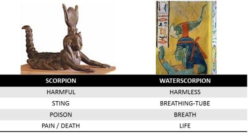 Serket. scorpion versus nepid